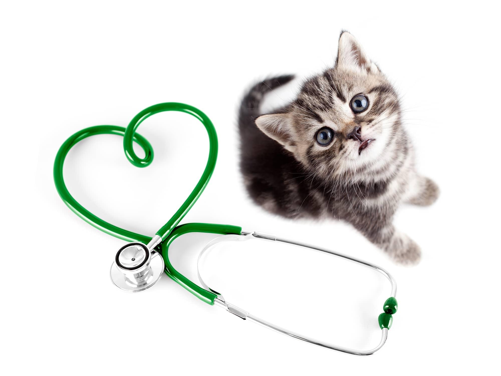 BrainVox - Website Rescue Cat 1