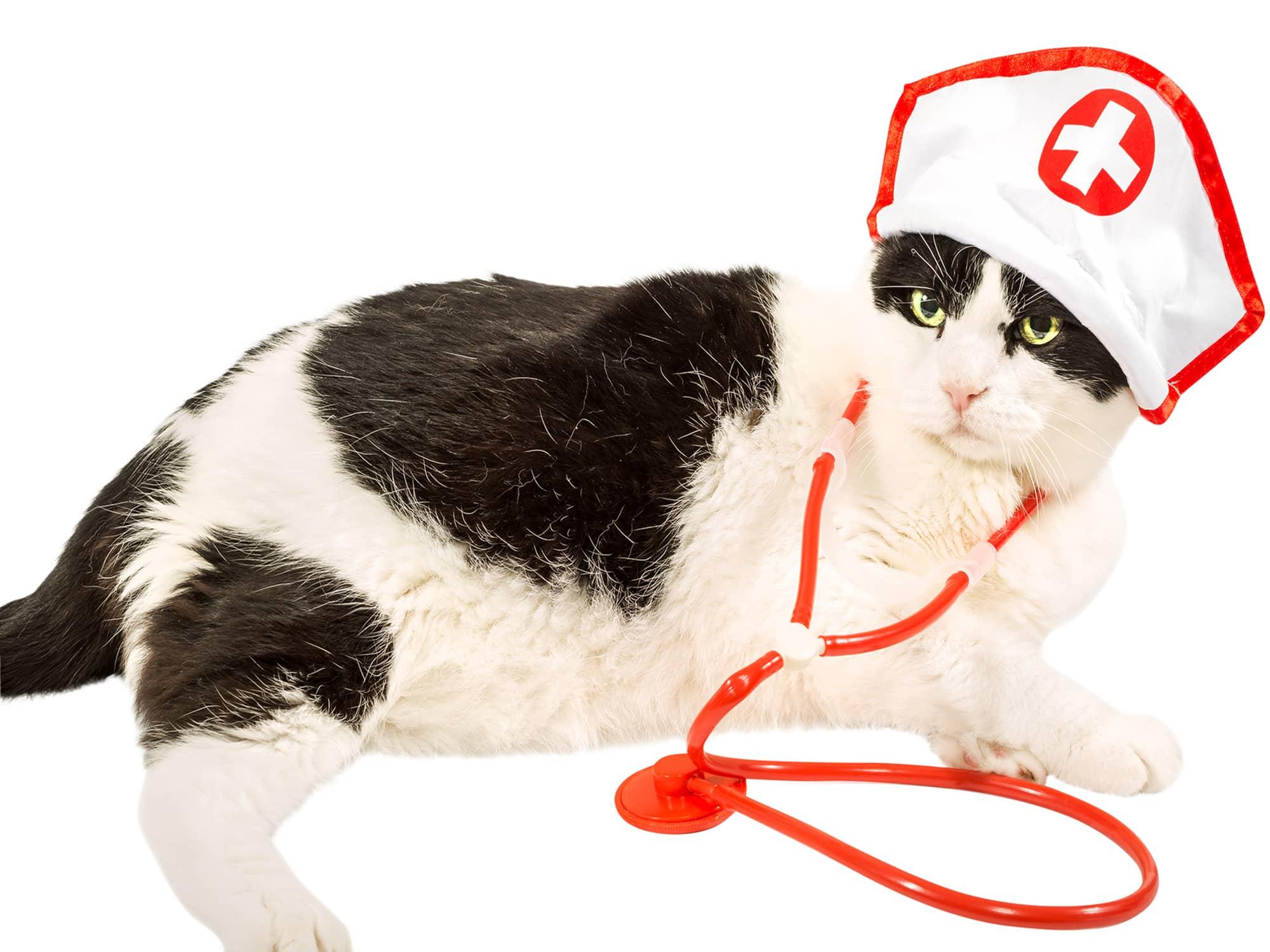 BrainVox - Website Rescue Cat 2